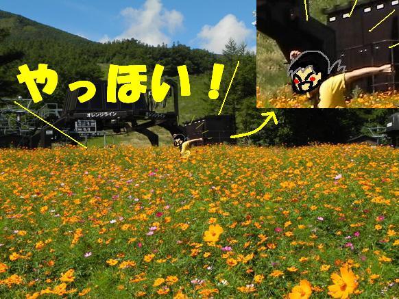 f:id:k9352009:20110922114841j:image
