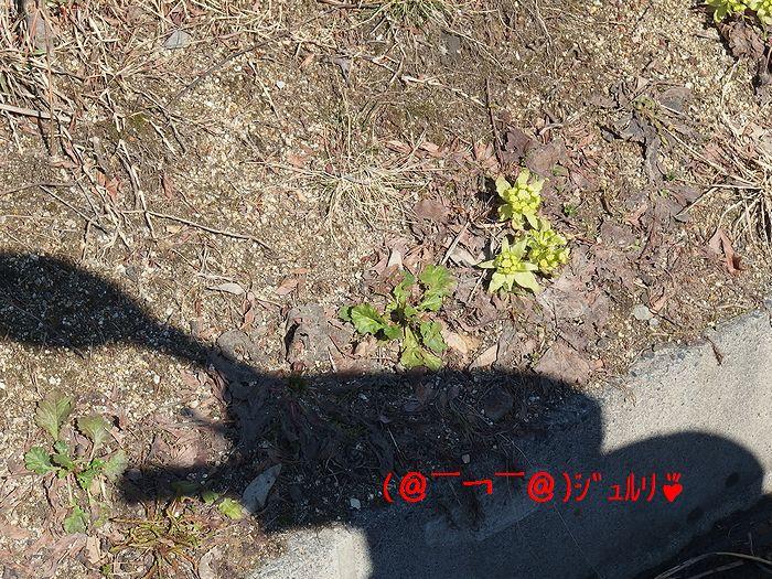 f:id:k9352009:20140402104258j:image