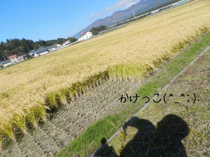 f:id:k9352009:20151110121632j:image