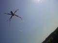 [動物]蜘蛛