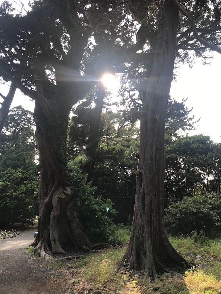 f:id:k_k_azuki:20200811142108j:plain
