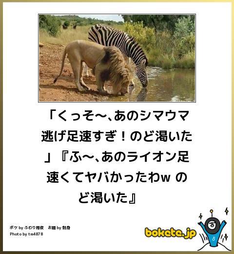 f:id:k_nali:20170418173841j:plain