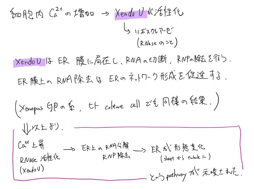 f:id:k_sudachi:20200505181417p:plain