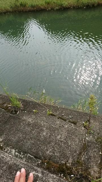 相浦川でチニング(*^^*) - 佐世...