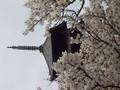 [京都]仁和寺