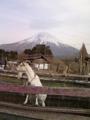 [富士ミルクランド]ヤギと富士山