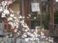 [祇園]お店にえさをねだりに来たらしい鳥。
