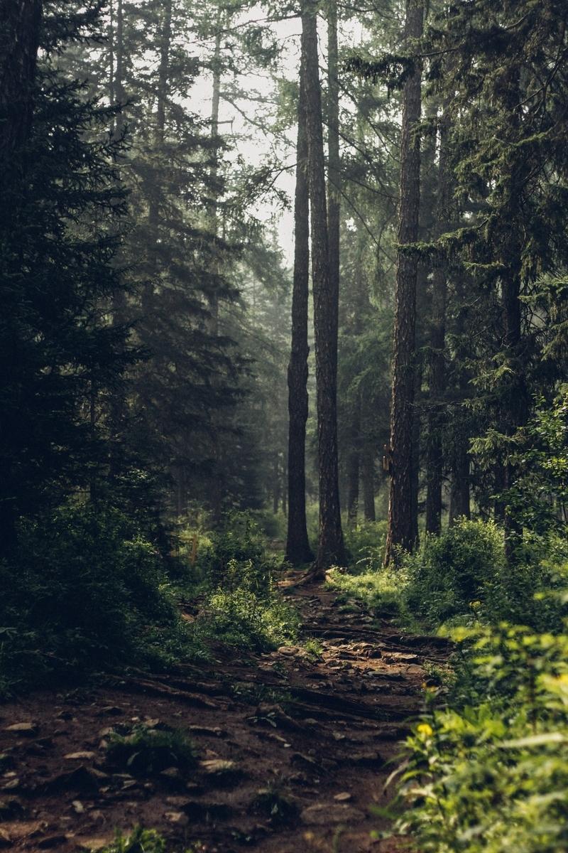 "<img src=""forest.jpg"" alt=""群青のマグメル"">"