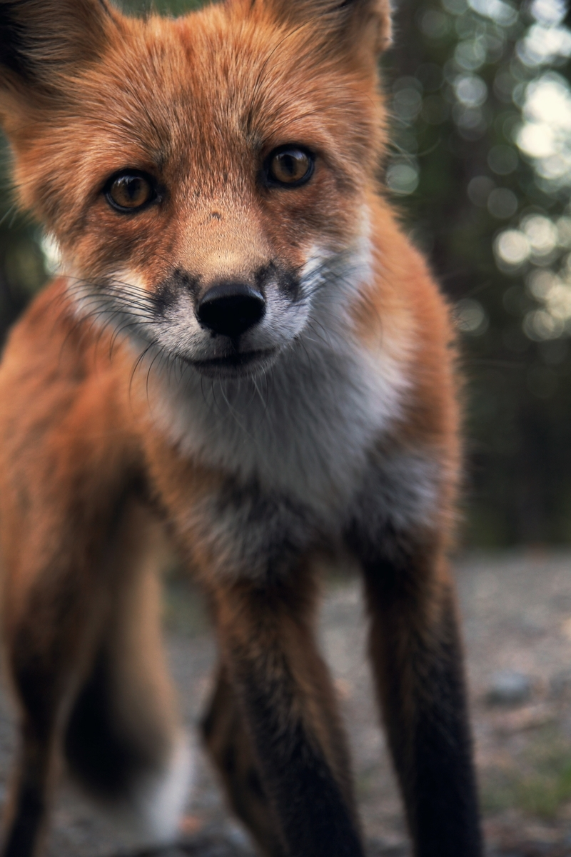 "<img src=""fox.jpg"" alt=""世話焼きキツネの仙狐さん"">"