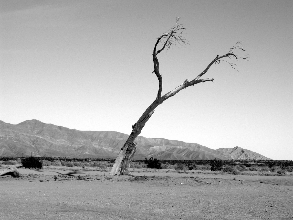 """<img src=""""deadtree.jpg"""" alt=""""死んだ木"""">"""