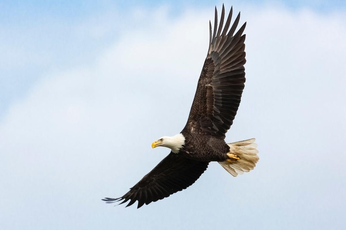 """<img src=""""eagle.jpg"""" alt=""""イーグルスのドキュメンタリー"""">"""