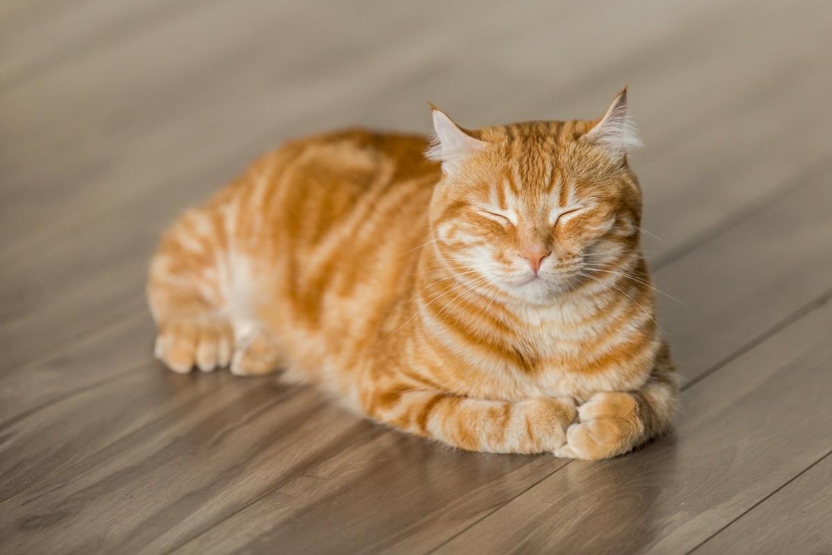 "<img src=""cat.jpg"" alt=""同居人の猫はひざ、時々頭の上"">"