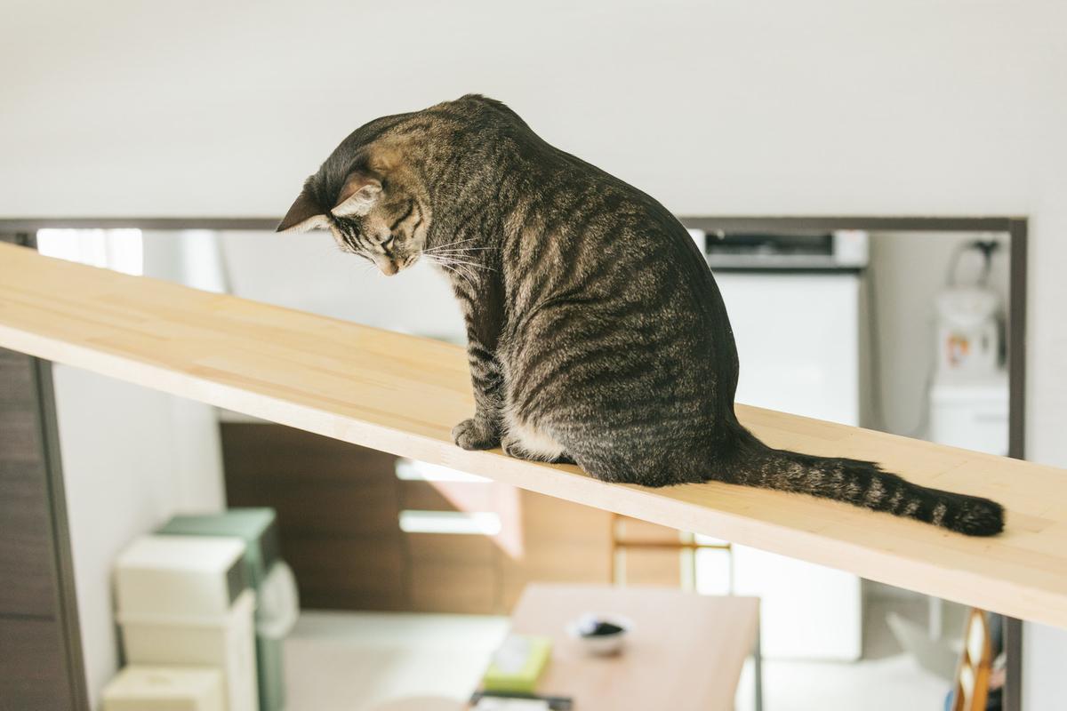"<img src=""catwalk.jpg"" alt=""猫のいる部屋"">"