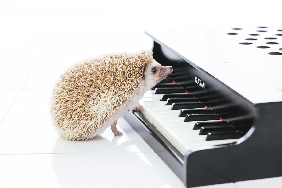 "<img src=""piano.jpg"" alt=""ピアノを弾くハリネズミ"">"