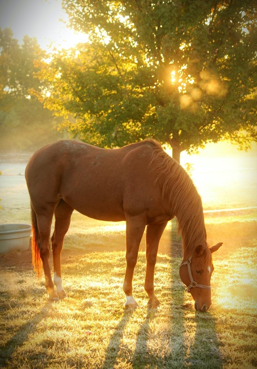 "<img src=""horse.jpg"" alt=""野生の馬"">"