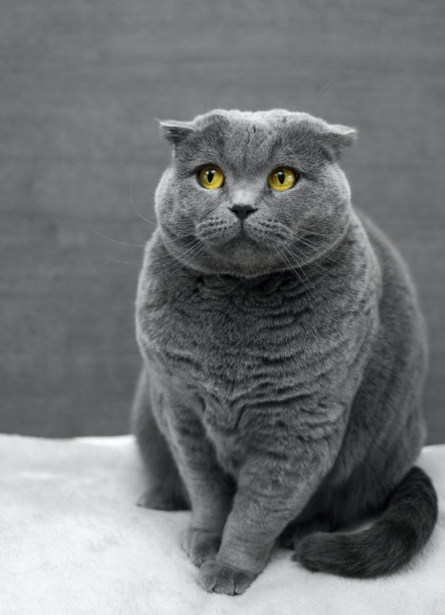 "<img src=""cat.jpg"" alt=""笑わない猫"">"