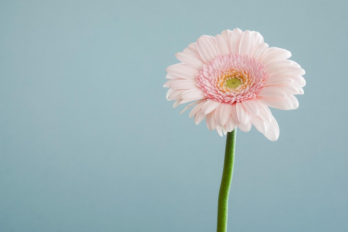 """<img src=""""flower.jpg"""" alt=""""あの日見た花の名前"""">"""