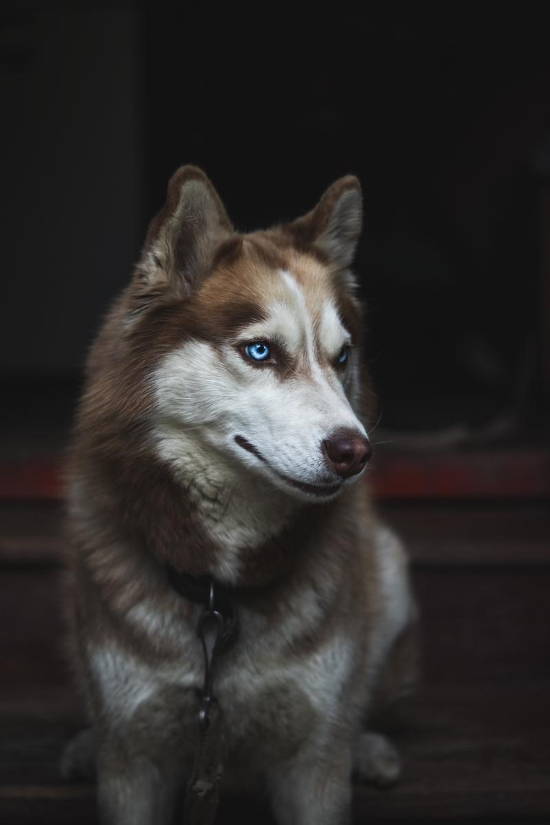 """<img src=""""wolf.jpg"""" alt=""""たたずむ狼"""">"""