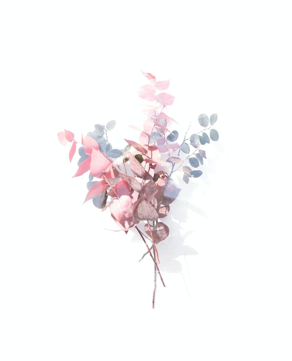 """<img src=""""flower.jpg"""" alt=""""美しさの正体"""">"""