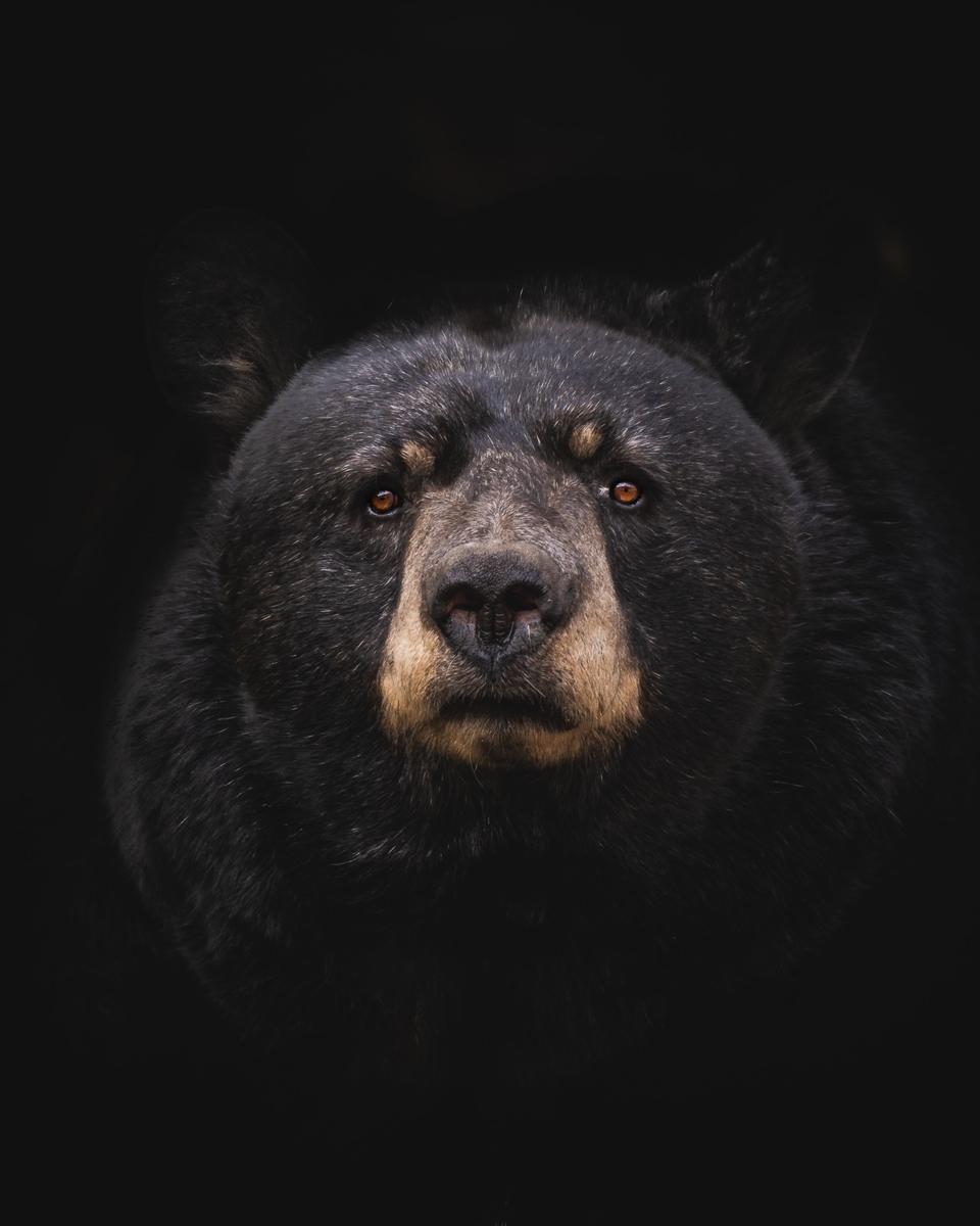 """<img src=""""bear.jpg"""" alt=""""くまクマ熊ベアー"""">"""