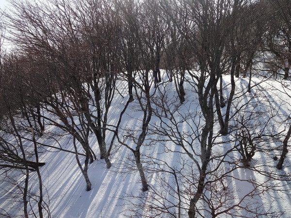 f:id:kab-log:20140224151218j:plain