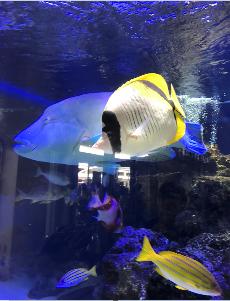 f:id:kabufxfish:20170109231340p:plain