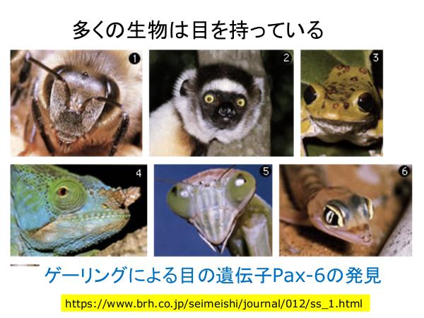 f:id:kabukawa:20190409021127p:plain:w500