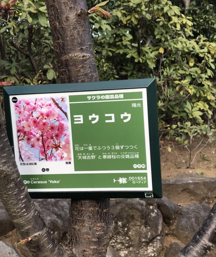 f:id:kabukimonoo:20190425020504j:plain