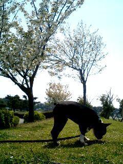 f:id:kaburera:20050415102953:image