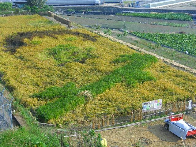 f:id:kabutoyama-tigers:20120131200228j:image