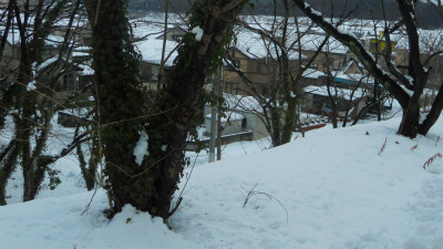 f:id:kabutoyama-tigers:20120205153014j:image