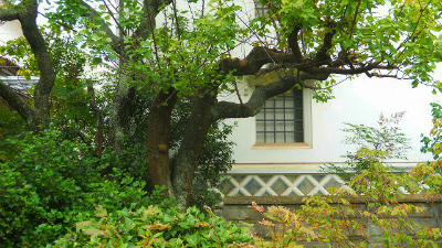 f:id:kabutoyama-tigers:20120318140150j:image