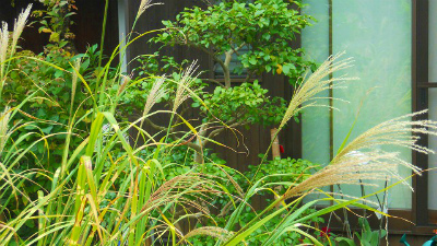 f:id:kabutoyama-tigers:20120318140734j:image