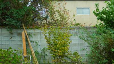 f:id:kabutoyama-tigers:20120318141836j:image