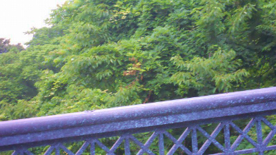 f:id:kabutoyama-tigers:20120403130235j:image