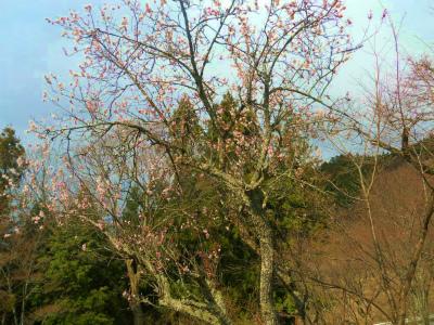 f:id:kabutoyama-tigers:20120419200924j:image