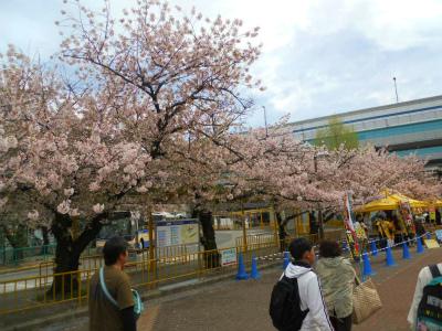 f:id:kabutoyama-tigers:20120424192752j:image