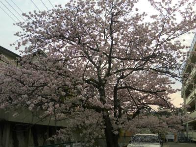 f:id:kabutoyama-tigers:20120424193255j:image