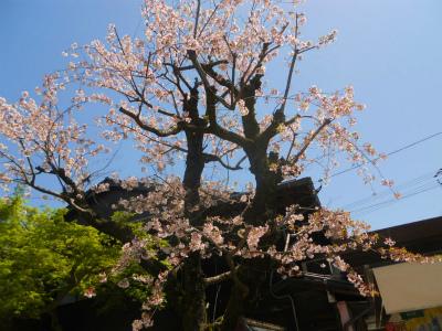 f:id:kabutoyama-tigers:20120430204715j:image