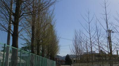 f:id:kabutoyama-tigers:20120501192403j:image