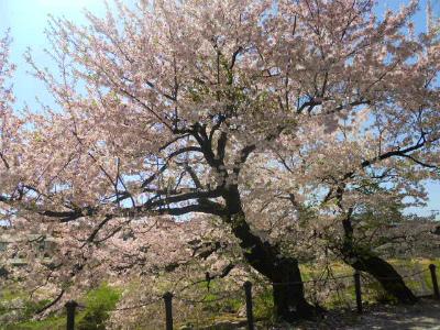 f:id:kabutoyama-tigers:20120502202201j:image
