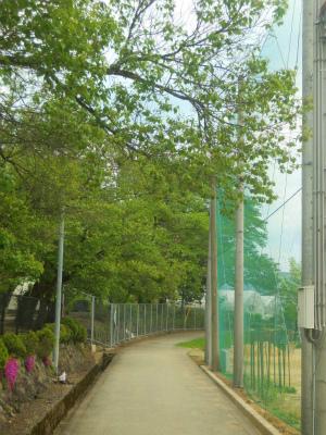 f:id:kabutoyama-tigers:20120523140556j:image