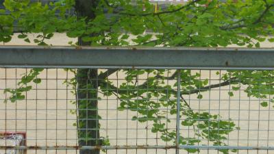 f:id:kabutoyama-tigers:20120523144019j:image