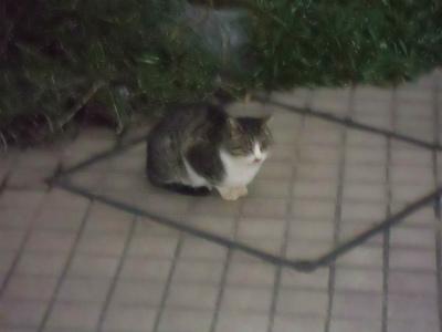 f:id:kabutoyama-tigers:20120701091658j:image