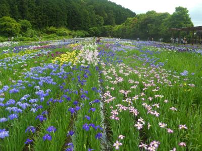 f:id:kabutoyama-tigers:20120806190004j:image