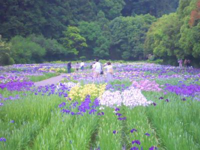 f:id:kabutoyama-tigers:20120806190615j:image