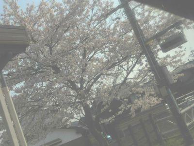 f:id:kabutoyama-tigers:20120910210832j:image