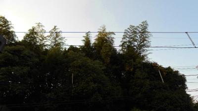 f:id:kabutoyama-tigers:20121024144859j:image