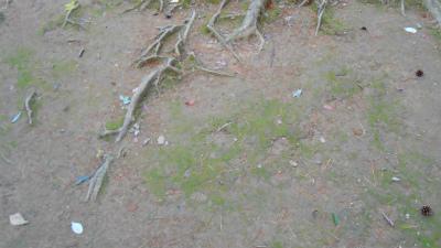 f:id:kabutoyama-tigers:20121103092326j:image