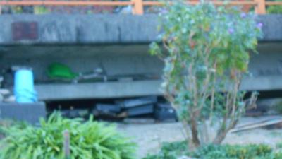 f:id:kabutoyama-tigers:20121111142254j:image